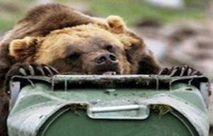 Bear resistant bins work!