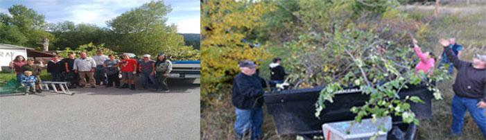 Attractant management through apple picking.