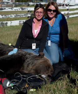 Bear-Monitoring-&-Aversion2